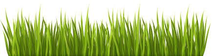 grass transparent background. Grass Transparent Background Grass E
