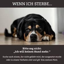 Trauer Sonjas Seelenhundes Webseite