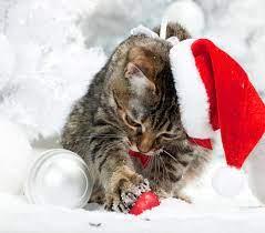 Wallpaper Kittens cat Christmas Winter ...
