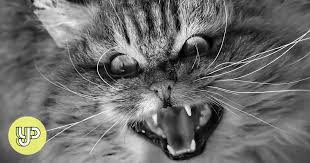13 reasons why <b>cats</b> are just plain <b>evil</b> - YP | South China Morning ...