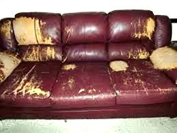 leather couch scratch repair elegant cats and leather sofas or cats and leather couches leather sofa