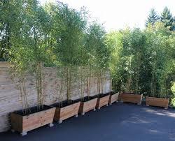 Small Picture Bamboo Garden Design Home Design Ideas