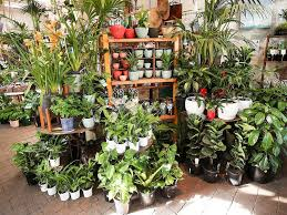 the best plant s that deliver and