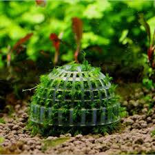 Decorating With Moss Balls The Best Mineral Stone Suspended Float Moss Ball Fish Tank 91