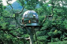 The Coolest Tree Houses In The World The 13 Most Amazing Homes Coolest Tree Houses