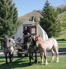 Small Picture 109 best Basque Wagon Shepherd images on Pinterest Gypsy wagon