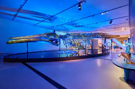 feelux lighting canada. out of depths the blue whale story feelux lighting canada
