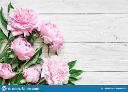 Wedding Photo Background Pink Peony Flowers On White Wooden Table Womans Day Or