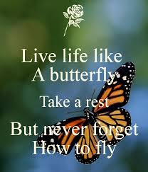 Butterfly Quotes Stunning Live Life Like A Butterfly Take A Rest But Never Forget How To Fly