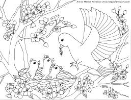 Wonderful Birds Coloring Pages Colouring For Fancy Birds Coloring