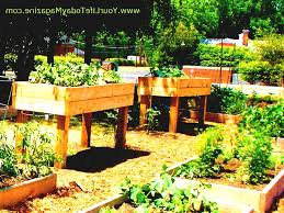 Small Picture Gardening Small Decor On Garden Design Ideas Photos For Gardens