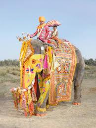 <b>Фестиваль слонов</b> в Джайпуре: masterok — LiveJournal
