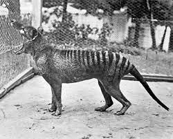 La Tigre della Tasmania — Stargate