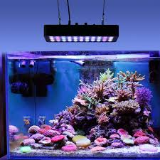 Nano Aquarium Kaufen