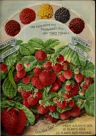 garden seed catalogs. 1905 Salzer\u0027s Seed Catalogue Page Garden Catalogs