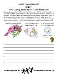 Quaking Aspen – Adaptations of Trees