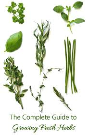 Herb Plant Identification Chart Growing Herbs How To Grow Store And Use Fresh Herbs