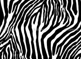 Zebra Patterns Impressive Zebra Patterns Thevillasco