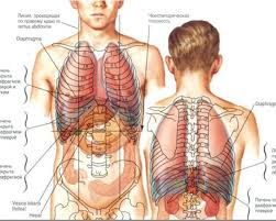 Как устроен организм человека Детская онлайн энциклопедия Хочу  Как устроен организм человека