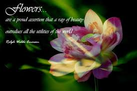 Beauty And Flower Quotes Best of Flower Quotes About Beauty