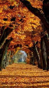 Autumn phone Wallpaper - NawPic