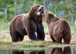 Image result for picture of bears