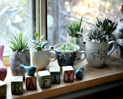 Small Picture Succulent Garden Design Tips Images about rock garden ideas on