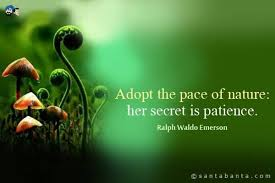 Adopt The Pace Of Nature Her Secret Is PatienceRalph Waldo Emerson Interesting Emerson Nature Quotes