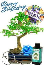 balloon blast happy birthday bonsai gift for him
