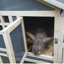bunny ark hybrid rabbit hutch and run