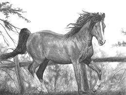 running horse drawing. Wonderful Drawing Horse Drawing  Running By Bobby Shaw And