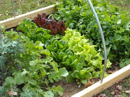 Small Picture The Year Round Harvest Growing Food In a Backyard Garden for a