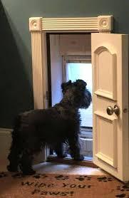 door with pet door a doggy door this is way cuter than that plastic piece to