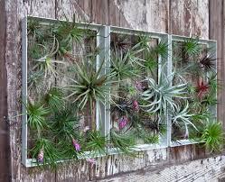 garden photo frames. Living Wall Art Vertical Garden Frames By Airplantman Photo