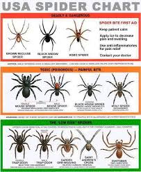 Usa Spider Chart Know How To Identify The Dangerous From