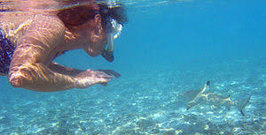 shark attack on humans. Beautiful Humans A Blacktip Reef Shark In Rare Circumstances Such As Bad Visibility  Blacktips May Bite Humans Mistaking Them For Prey Under Normal Conditions However  For Shark Attack On Humans B