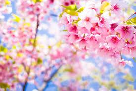 Cherry Blossom Light Tree Bunnings This Cherry Blossom Tree Is Made With 880 000 Lego Bricks