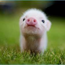 Cute Animal Desktop Wallpaper Animal ...