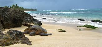 Laniakea Beach Laniakea Beach Hawaii Holidays Tour Lodging