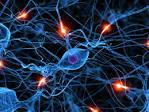 Images & Illustrations of nerve