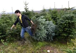 List Of Places You Can Chop Your Own Christmas Tree Down Around Buffalo, NY