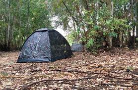 camping in the woods. Download Camping Tent In The Woods Stock Image. Image Of - 98241043