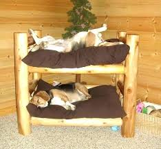 Dog bed furniture Medium Size Dog Fancy Dog Beds Dogs Beds Fancy Dog Beds Stylish Dog Beds Fancy Dog Beds Cheap Dogs Fancy Dog Beds Orthopedic Memory Foam Dog Beds Fancy Dog Beds Exciting Fancy Dog Beds For Your House Idea Rewearco
