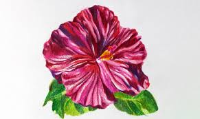 See more ideas about drawings, easy drawings, drawing for kids. Drawing Flowers With Colored Pencils 5 Simple Steps