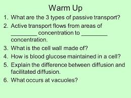 3 Types Of Passive Transport Warm Up 1 What Are The 3 Types Of Passive Transport 2