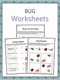 Bug & Insect Facts, Worksheets & Information for Kids