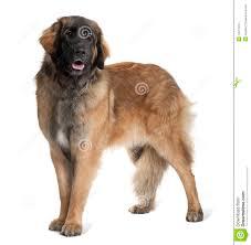 ehbo bij huisdieren