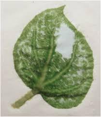 pound center of leaf