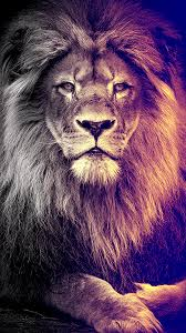 Lion Background Images Hd 1080p Free ...