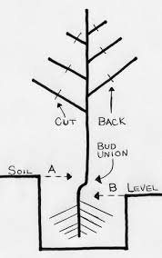 Tree Root Depth Chart Planting Depth Chart For A Plethora Of Information Visit